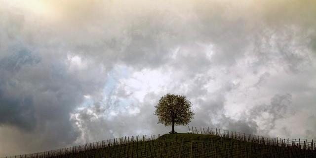 anima-spirito-fiori-di-bach-rimedi-floreali-bologna-emilia-romagna-640x321 Una Mappa per il Cambiamento