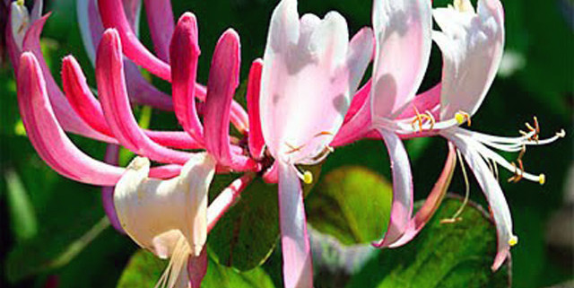 fiori-di-bach-rimedi-floreali-bologna-emilia-romagna-10-640x321 Edward Bach tra Scienza e Fede