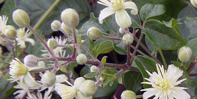 fiori-di-bach-rimedi-floreali-bologna-emilia-romagna-11-640x321 Edward Bach tra Scienza e Fede