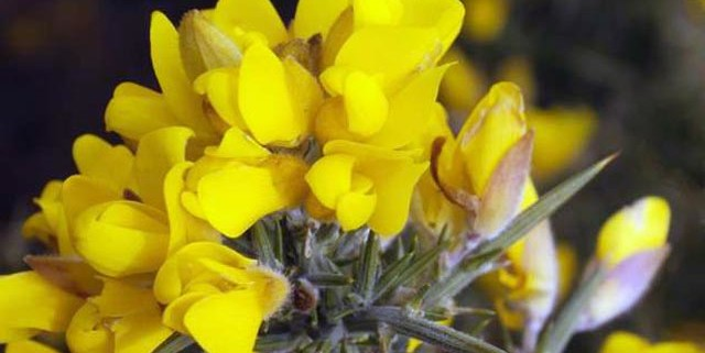 fiori-di-bach-rimedi-floreali-bologna-emilia-romagna-15-640x321 Edward Bach tra Scienza e Fede