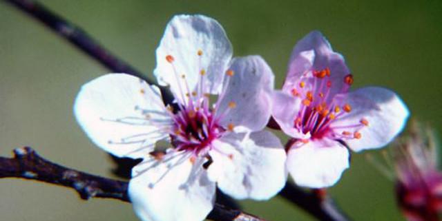 fiori-di-bach-rimedi-floreali-bologna-emilia-romagna-19-640x321 Attitudini del Terapeuta