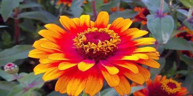fiori-di-bach-rimedi-floreali-bologna-emilia-romagna-28-640x321 Una Mappa per l'Anima