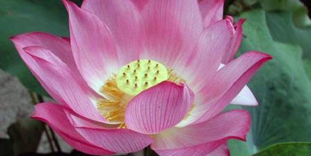 fiori-di-bach-rimedi-floreali-bologna-emilia-romagna-29-640x321 Una Mappa per l'Anima