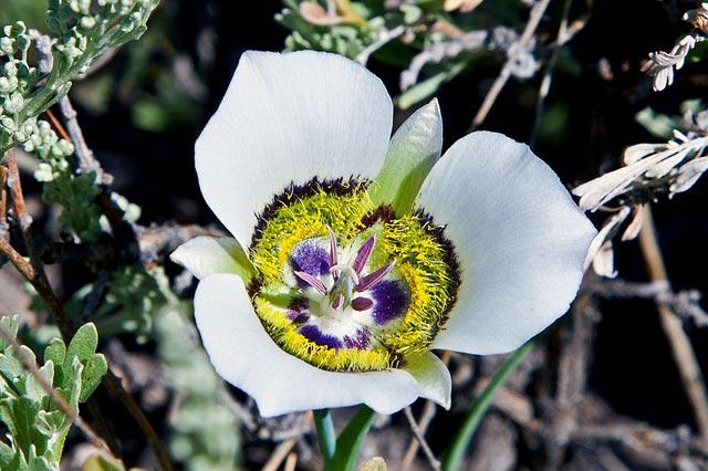 fiori-di-bach-rimedi-floreali-bologna-emilia-romagna-30 Una Mappa per l'Anima