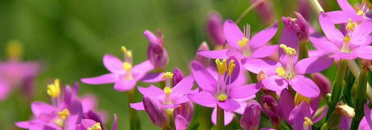 mini-fiori-di-bach-rimedi-floreali-bologna-emilia-romagna-9-1210x423 Home