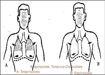 respirazione-clavicolare-pratiche-consapevolezza-meditazione-mindfulness-bologna Respirazione Completa