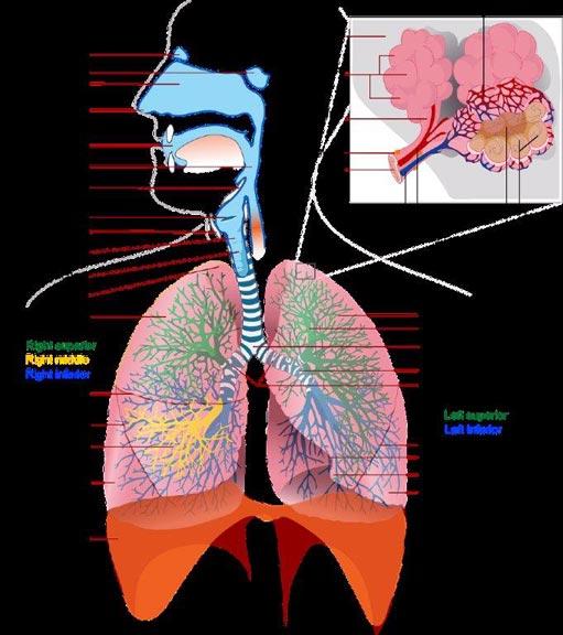 respiro-completo-pratiche-consapevolezza-meditazione-mindfulness-bologna Respirazione Completa