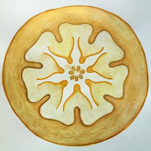 sigilli-planetari-steiner-daniela-iacchelli-psicoterapeuta-bologna-7 Sigilli Planetari di Steiner creati da Daniela Iacchelli