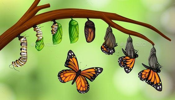 Metamorfosi-farfalla Attività Spaziovivo - 2020